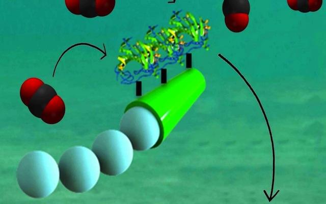 Micro motores impulsados por enzimas descontaminan el mar