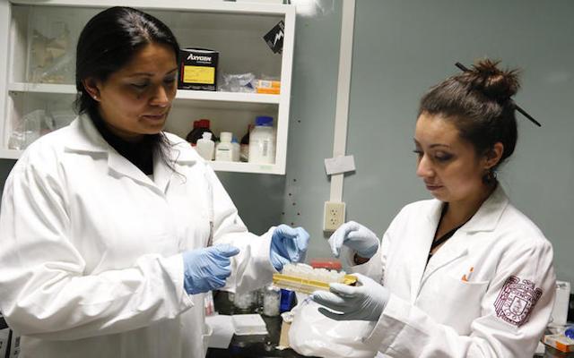 Reducen 85% virus del papiloma humano en 420 mujeres, al aplicarles terapia del IPN
