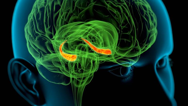 Un experimento pionero tratará de resucitar el cerebro de 20 pacientes clínicamente muertos