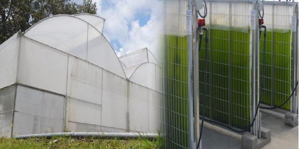 Instalan biorrefinería que genera biocombustibles a partir de microalgas y aguas residuales