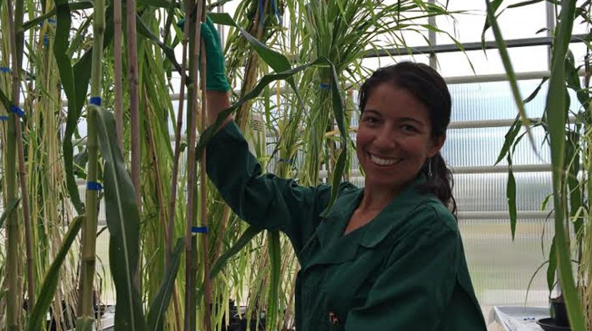 Resultado de imagen para Crea biotecnóloga Bélgica herbicida natural para cultivos agronómicos