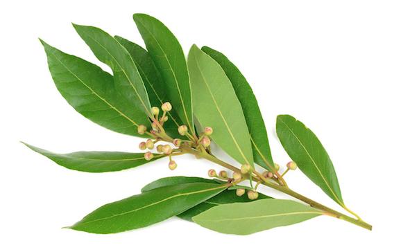 La madera del laurel impide la proliferación de bacterias perjudiciales en alimentos