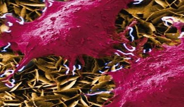 Investigadores desarrollan un nanogenerador que permite estimular células vivas