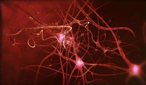 Revelan el mecanismo por el cual dormir poco perjudica a nuestra capacidad de atención