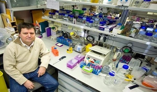 Expertos andaluces descubren nuevas vías de estabilidad del ADN