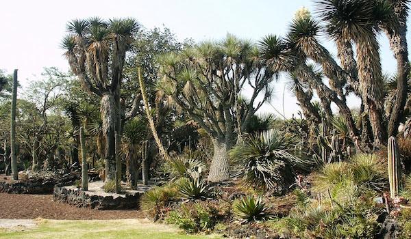 Prácticas biodivertidas en el Jardín Botánico de la UNAM