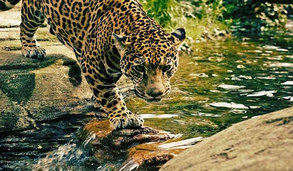 40 mil mexicanos aportan conocimiento sobre especies mexicanas
