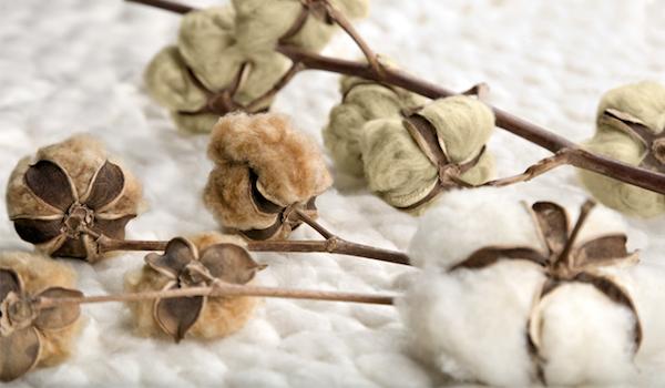 9 razones para comprar productos fabricados con algodón orgánico