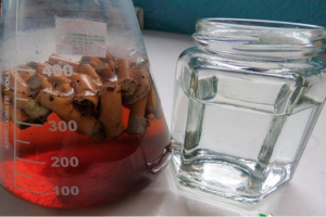 Logra joven científico obtener papel de colillas de cigarro a través de método biotecnológico