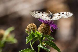 Las amenazas que hacen 'volar' a los insectos